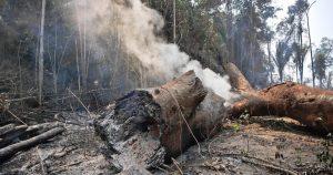 Revealed: UK investors' $2bn backing for meat giants linked to Amazon deforestation