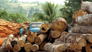 «Die faulen Äpfel Brasiliens» – So viel illegale Abholzung steckt in EU-Produkten