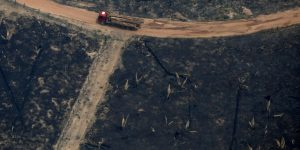 2.248 Waldbrände bedeuten für Amazonas verheerendsten Juni seit 13 Jahren