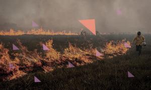 Was Österreich gegen noch mehr Amazonas-Brände tun sollte